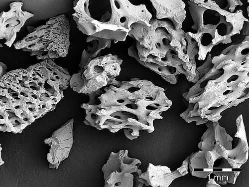 Scanning electron microscopy image of naturesQue MaxOss P.